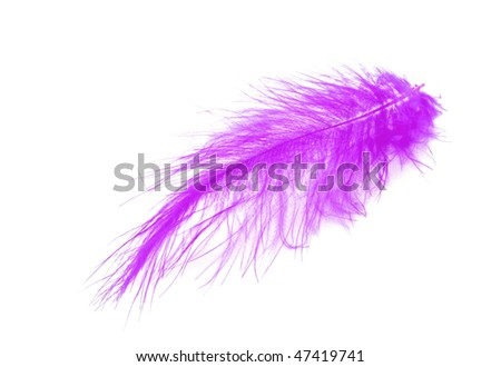 Violet feather over white background