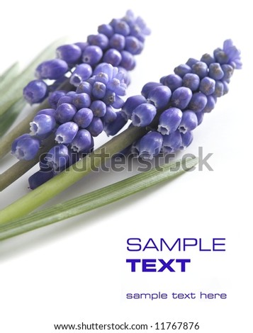 violet flowers - stock photo