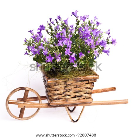 violet flowers in basket isolated on white - stock photo