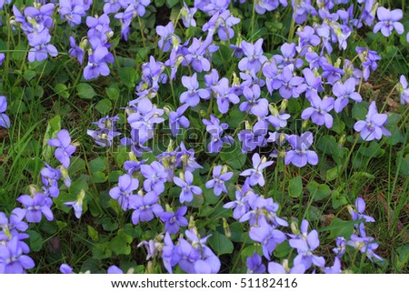 violet flowers in grass