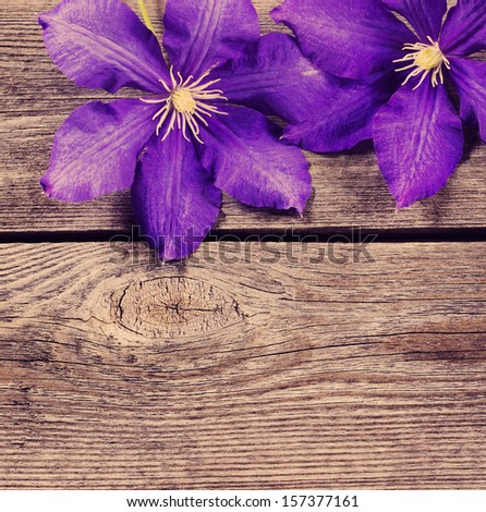 violet flowers on wooden background - stock photo