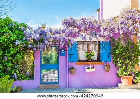 Violet house with violet flowers. Colorful houses in Burano island near Venice, Italy - stock photo