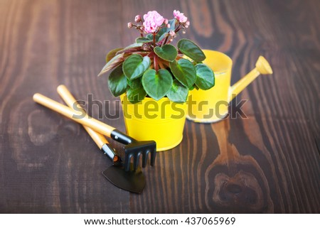 Violet in a flowerpot with shovel and rake on a wooden background - stock photo
