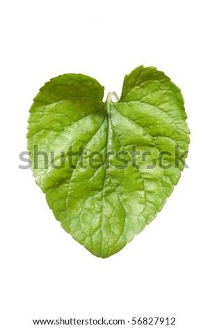 violet leaf heart - stock photo
