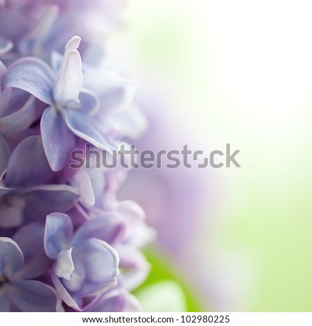 Violet lilac background - stock photo