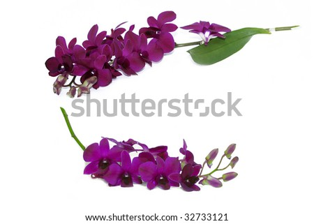 violet orchid flower - stock photo