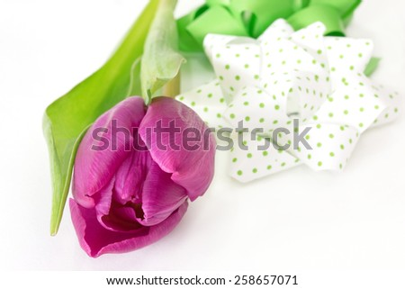 Violet tulip with white and green bow - stock photo