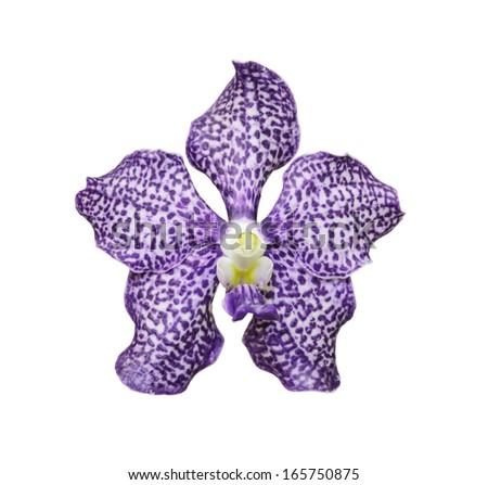 violet - white vanda orchid Isolated with a white background with clipping path - stock photo
