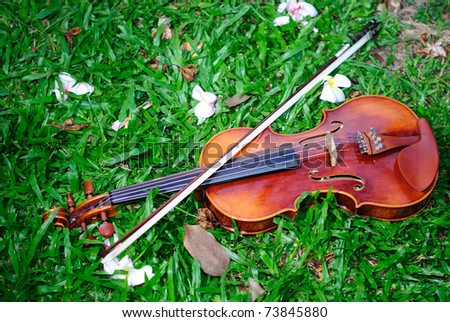 Violin on the grass - stock photo