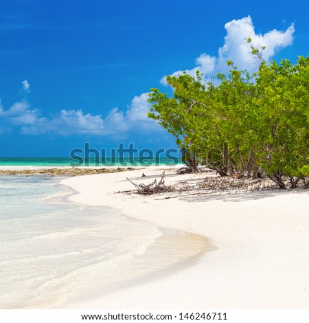 Virgin tropical beach with mangroves near the water in Coco Key, Cuba - stock photo