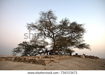 Visit of Tree of Life, Bahrain 03-01-2017