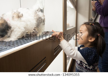 Visiting a pet shop, a little girl decides which little doggy in the window is for her. Turns out it's a cute little Shih Tzu. - stock photo