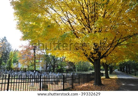Visiting the cemetery and grave sites on a bright fall day.  Photo features a brightly colored tree with yellow leaves, old grave stones and a fenced in cemetery.