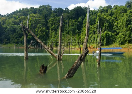 Visitor boat passing against dead tree stumps. - stock photo