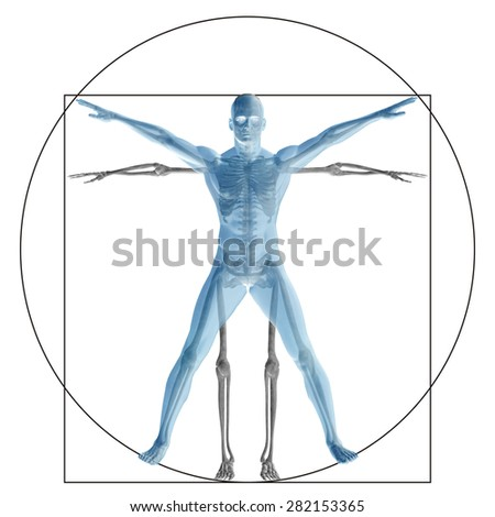 Vitruvian human or man as a concept, metaphor conceptual 3d proportion anatomy body isolated for biology, anatomical, Leonardo, medicine, symbol, physiology, skeleton, health, humanity or morphology - stock photo