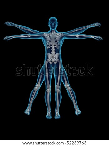 Vitruvian man - stock photo