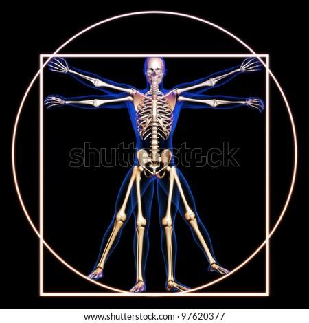 Vitruvian man with bones concept - stock photo
