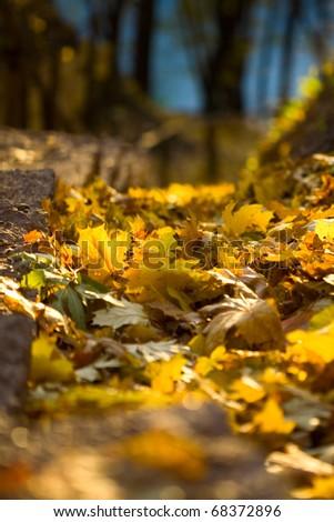Vivid autumn foliage over the sun light - stock photo