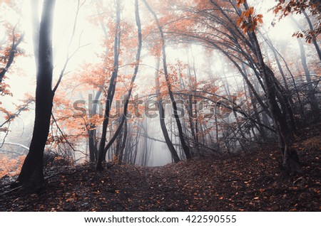 vivid autumn forest foliage - stock photo