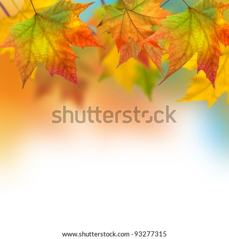 Vivid autumn leaves of a tree - stock photo