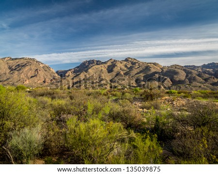 Vivid blue sky with mountains and Saguaro Cacti