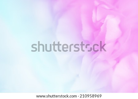 vivid color carnation in blur and soft style for background