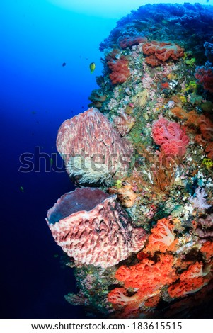 Vivid,colorful corals and sponges on an underwater tropical reef - stock photo