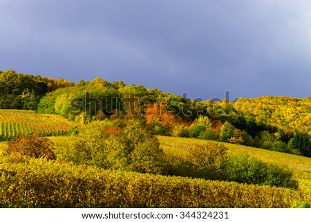 Vivid colors of autumn vineyards in Andlau, Alsace. Contrast colorful weather. Season concept.