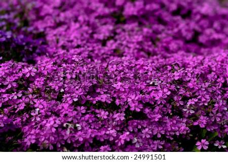 Vivid flowers background - stock photo