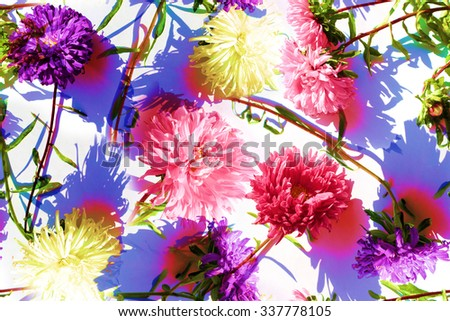 Vivid flowers pattern seamless on white background. Allover repeated asters on a summer backdrop. Effect Realistic Photo collage for floral design. - stock photo