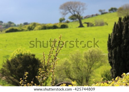 Vivid Green Countryside in Yorkshire, England. - stock photo