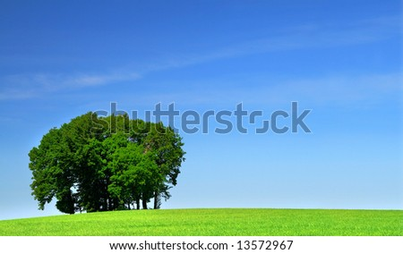 vivid green grass field and a bunch of trees