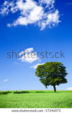 vivid green grass field and lonely tree
