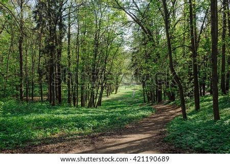 Vivid green trees with rural road in park in spring time. Beautiful park with green trees and rural road. Peaceful daylight park scene. Natural walkway in quiet green park. Park nature. Park view. - stock photo