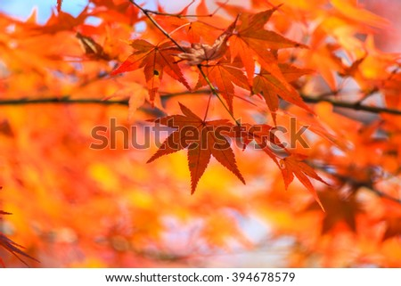 Vivid leafs with nature background
