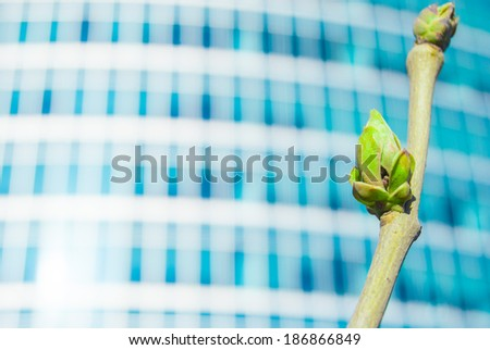 Vivid photo of green buds against office building in spring. Conceptual metaphor of innovation, startup and economic growth. - stock photo