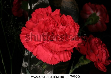 vivid red carnation - stock photo