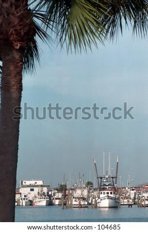 Viw behind a palm Madeira Beach FL - stock photo
