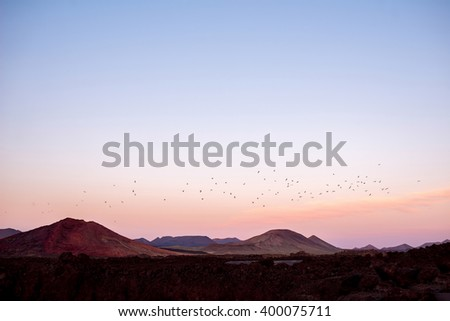 Volcanic landscape with birds flying in the evening on Lanzarote island in Spain - stock photo