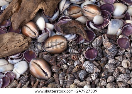 Volcanic stones and shells. - stock photo