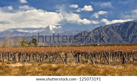 Volcano Aconcagua and Grape vines at a vineyard, Argentina. Aconcagua is the highest mountain in the Americas at 6,962 m. Andes mountain range, in the Argentine province of Mendoza - stock photo