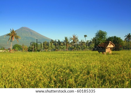 Volcano Agung and rice paddy (Bali - Indonesia) - stock photo