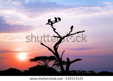 Vultures at dawn on the serengeti - stock photo