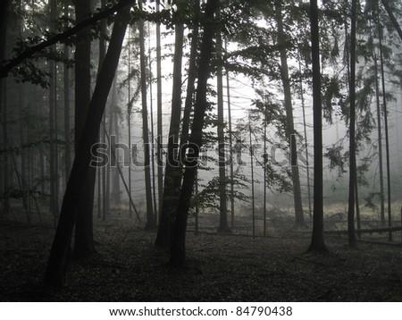 Wald im Morgendunst - stock photo