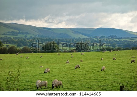 Wales countryside fields and hills, sheep grazing. - stock photo