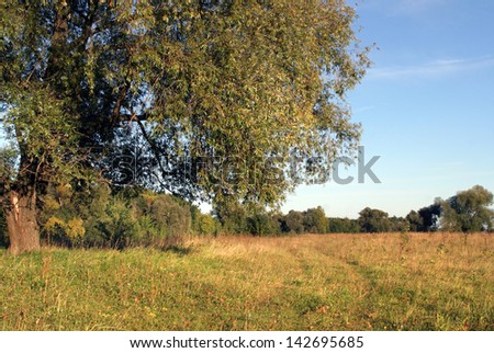 walk along a country road through a field near a forest clear summer day - stock photo