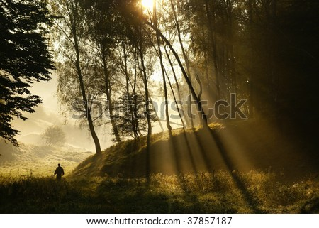 Walk along the forest in the early misty morning - stock photo
