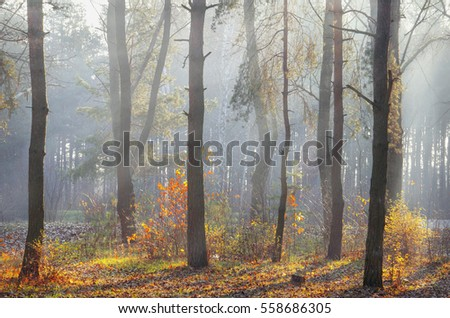 walk in the autumn forest in the sun