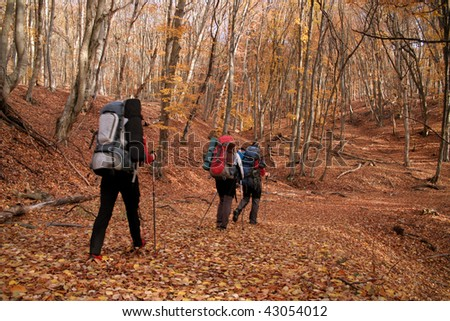 Walk in the autumn woods. - stock photo