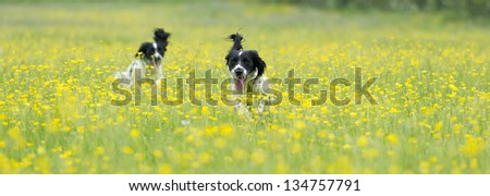 Walk in the buttercups - stock photo
